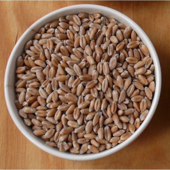 Bio-Weizen - 30 kg