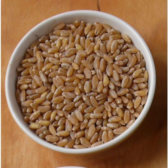 bio durumbúza (5kg)