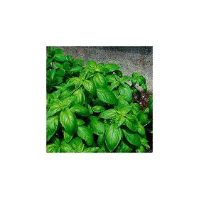 Fűszernövények