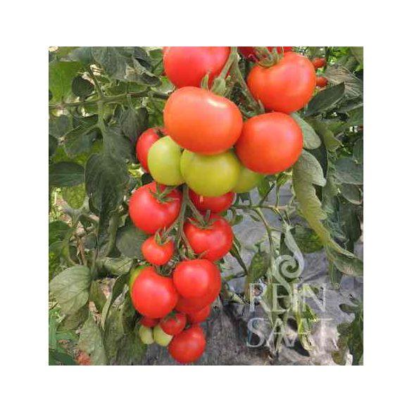 Fürtös paradicsom - Hellfrucht, biovetőmag