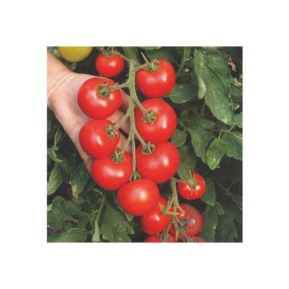 Salattomate, Hellfrucht - Biosaat