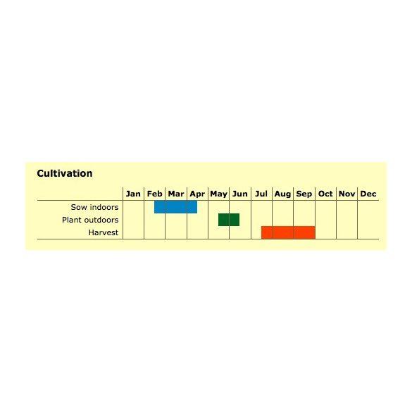 Sárga koktélparadicsom biovetőmag, Dattelwein