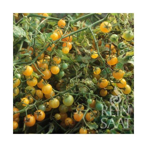 Sárga koktélparadicsom biovetőmag, Gelbe Johannisbeere