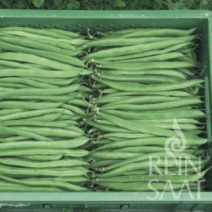 Zöld hüvelyű bokorbab, Marona, biovetőmag