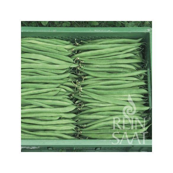 bokorbab, zöld hüvelyű - Marona, biovetőmag