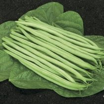 Grüne Buschbohne, Cupidon - Biosaatgut
