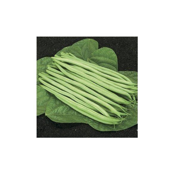 Zöld hüvelyű bokorbab biovetőmag, Cupidon