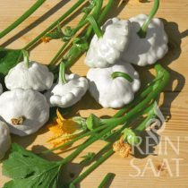 Patisson-Kürbis, Custard White - Biosaatgut