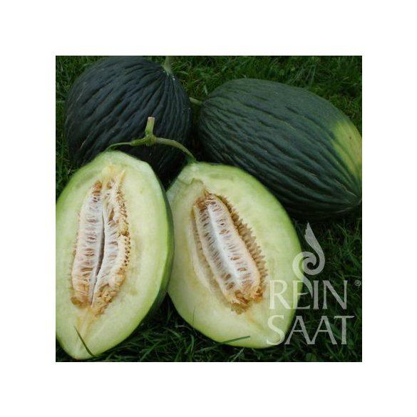 Honigmelone, Tendral negro tardio - Biosaatgut