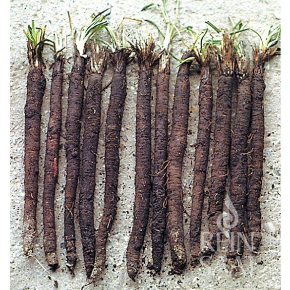 Feketegyökér, biovetőmag