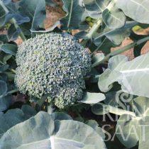 Broccoli,  Limba - Biosaatgut