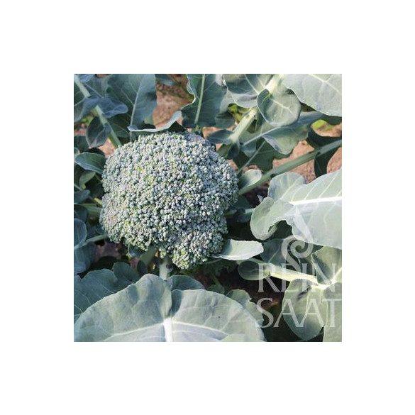 Brokkoli - Limba, biovetőmag