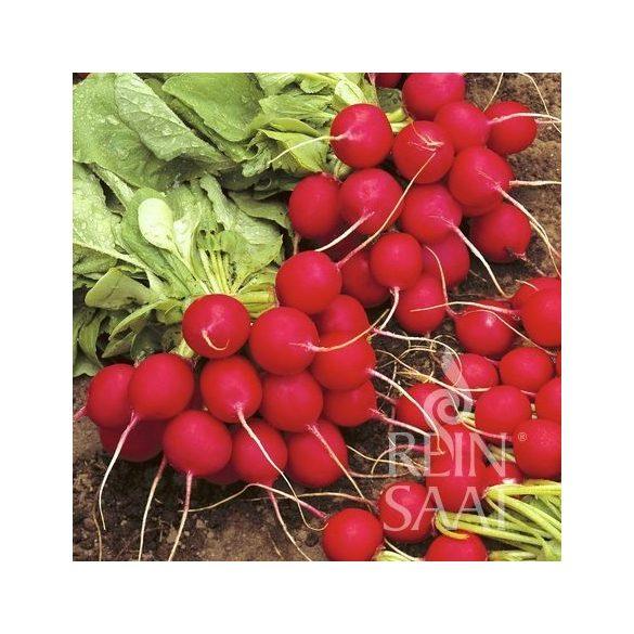 Radieschen,  Cherry belle - Biosaatgut