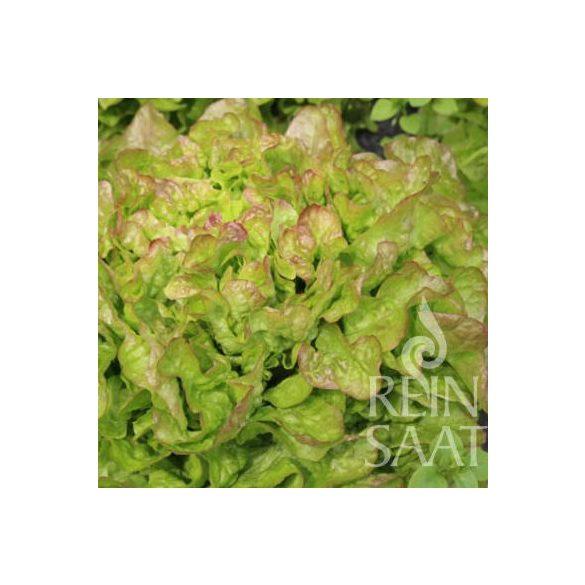 Tölgylevelű saláta biovetőmag