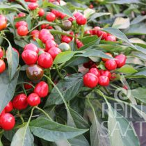 Csilipaprika biovetőmag, Red  Cherry small